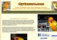 Sun conure pet parrot information from a sun conure owner